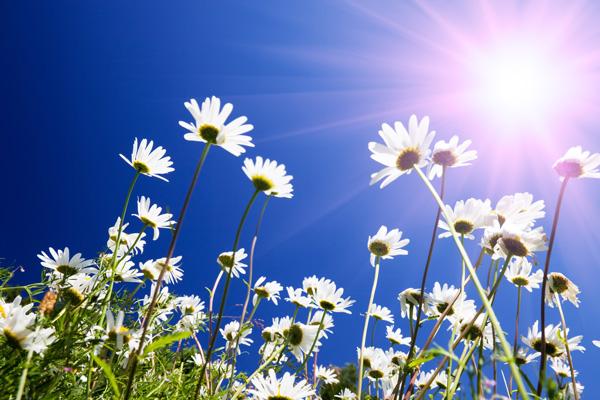 midsomma-blommor_51c6d3d0e087c3210f939bf2